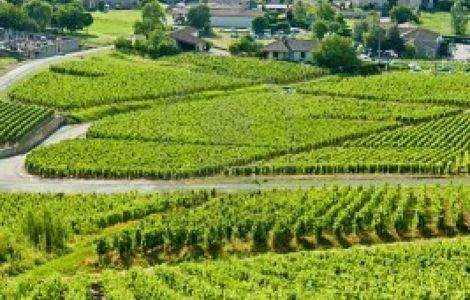 TASTE OF Burgundy Private Tour