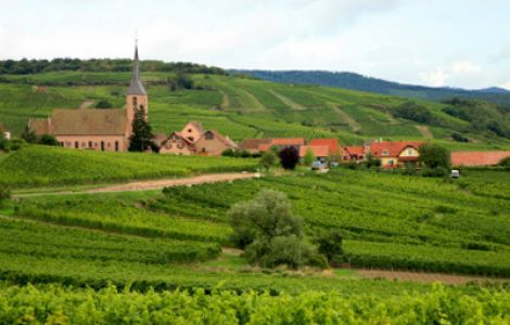 TASTE of Alsace Walk